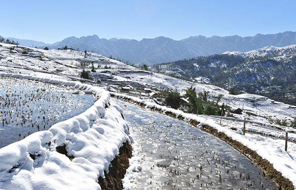 Tuyết rơi tại Sa Pa mùa đông 2013 (Ảnh – Josephine Huong Giang)