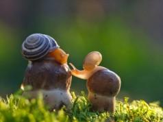 câu chuyện suy ngẫm mẹ và con ốc sên